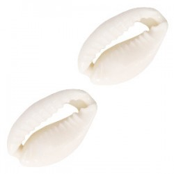 Perles coquillage Cauri Blanc naturel 17x12mm